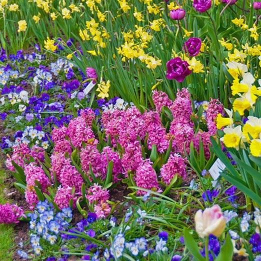 Blumenzwiebelmischungen