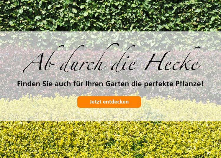 NL Hecken