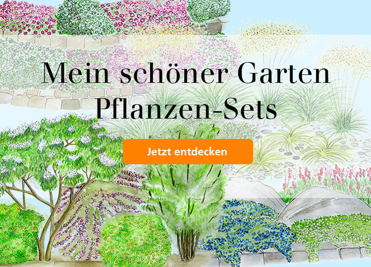 Aktuelle Heftangebote Aus Dem Mein Schöner Garten Magazin! Artikel Ansehen