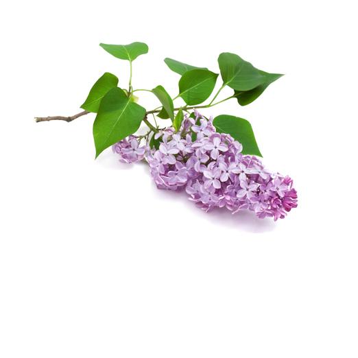 Shop Mein Schöner Garten pflanzen günstig kaufen mein schöner garten shop