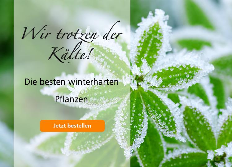 Winterharte Pflanzen
