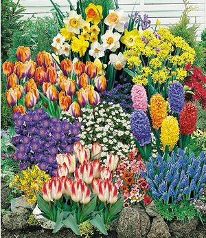 140 Blumenzwiebeln Spar-Paket, 140 St.