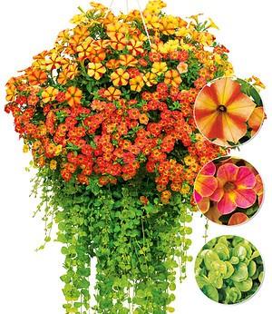 Balkonpflanzen Gunstig Online Kaufen Mein Schoner Garten Shop