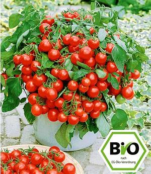 """Attila Hildmann BIO-Tomate """"Balkoni Red"""",2 Pflanzen"""