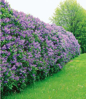 Gartenbedarf Kaufen Ihr Gartenshop Von Mein Schoner Garten