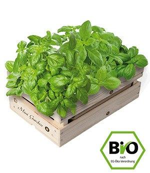 Baza Seeds Mini-Garten BIO-Basilikum,1 Kiste