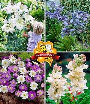 Bienenfreundliche Sommerblüher,34 Zwiebeln