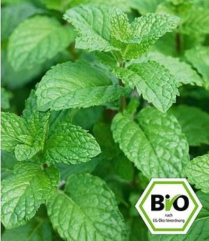 BIO-Erdbeer-Minze 1 Pflanze Mentha