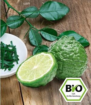 BIO-Kaffir-Limette,1 Pflanze