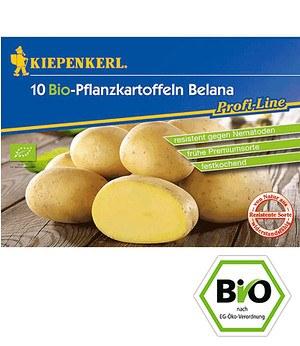 """BIO-Pflanzkartoffel """"Belana"""",10 Stück zertifizierte Saatkartoffel"""