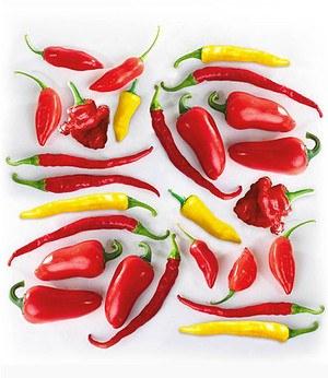 Chilli-Kollektion,3 Pfl.De Cayenne, BIO-Zitronen-Chilli & Hänge-Chili
