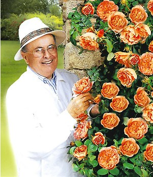 "Delbard Kletterrose ""Papi Delbard®"",1 Pflanze"
