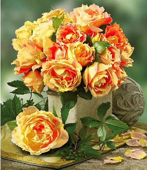 "Delbard Maler-Rose® ""Paul Cézanne®"",1 Pflanze"