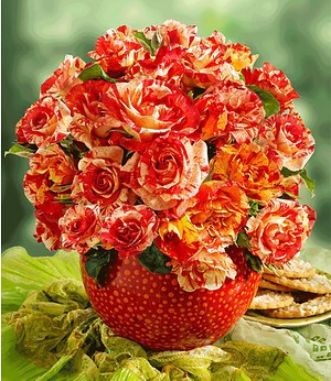"Delbard Malerrose® ""Alfred Sisley®"",1 Pflanze"