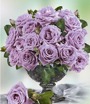 "Delbard Parfum-Rose ""Mamy Blue®"",1 Pflanze"