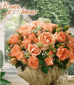 """Delbard Rose der Liebe """"Bouquet de Mariée®"""", 1 Pflanze"""