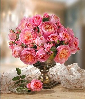 "Delbard Rose der Liebe ""Dames de Chenonceau®"",1 Pflanze"
