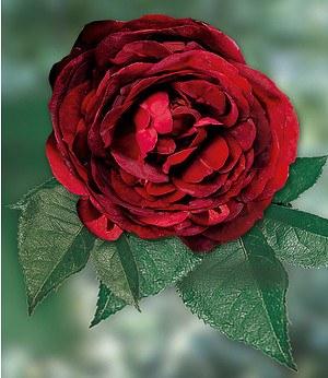"""Delbard Rose """"Noir de Malicorne®"""",1 Pflanze"""