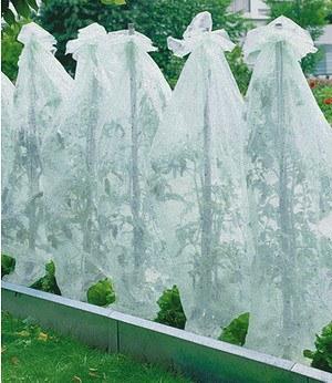 Gem sepflanzen g nstig online kaufen mein sch ner garten for Deko gartenartikel