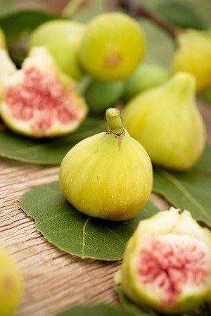 Feigenbaum (Ficus) grüne Frucht - Ficus carica