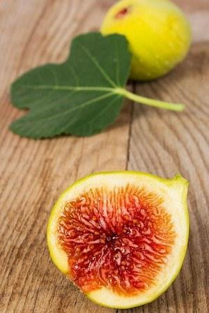 Feigenbaum (Gota de Miel) Honig feige - Ficus carica Gota de Miel