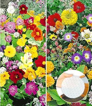Kiepenkerl Duftblumen Kollektion,10 Stück