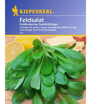 Kiepenkerl Feldsalat 'Holländischer breitblättriger',1 Portion