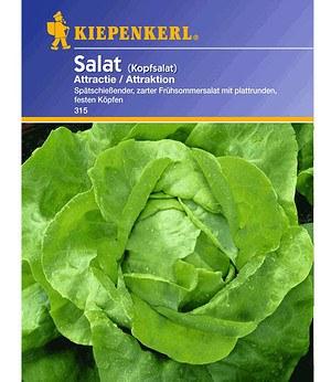 "Kiepenkerl Kopfsalat ""Attraktion"",1 Portion"