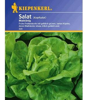 """Kiepenkerl Kopfsalat """"Maikönig"""",1 Portion"""