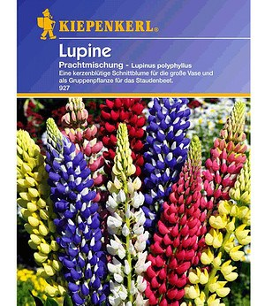 "Kiepenkerl Lupine ""Russels Mix"",1 Portion"