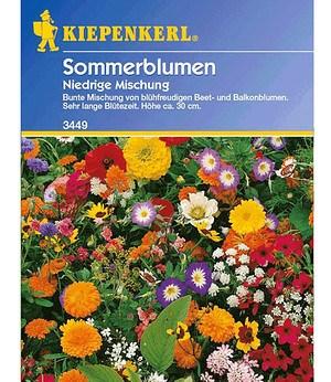 Kiepenkerl Niedriger Sommerblumen-Mix,1 Portion