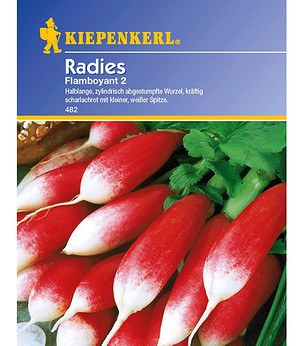 Kiepenkerl Radies 'Flamboyant 2',1 Portion