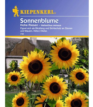 Kiepenkerl Sonnenblume 'Hohe Riesen',1 Portion