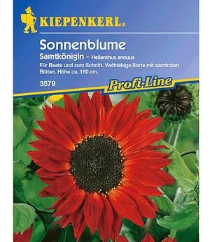 """Kiepenkerl Sonnenblume """"Samtkönigin"""",1 Portion"""