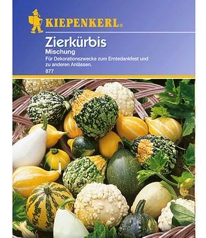 """Kiepenkerl Zierkürbis """"Kleinfruchtiger Mix"""",1 Portion"""