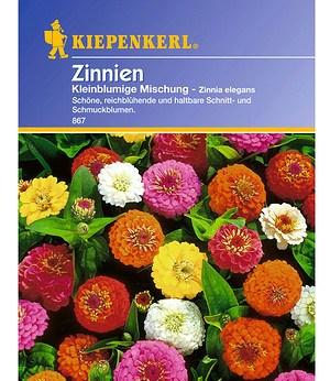 Kiepenkerl Zinnie 'Kleinblumige Mischung',1 Portion