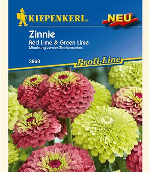 Kiepenkerl Zinnie 'Red Lime & Green Lime',1 Portion