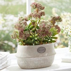 Kunstpflanze-Topfblume Country Flower