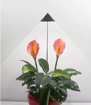 """LED Wachstumslampe fürs Zimmer """"graphit"""",1 Stück"""