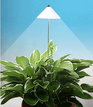"""LED Wachstumslampe fürs Zimmer """"weiß"""",1 Stück"""