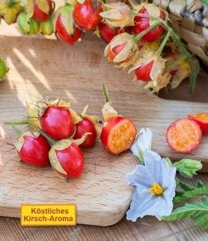 "Litschi-Tomate ""StarBenas®"",1 Pflanze"