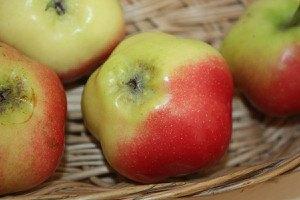 Lubera Apfel Sternapi (Dekoapfel)