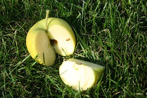 Lubera Easytree: Apfel Bionda® Patrizia
