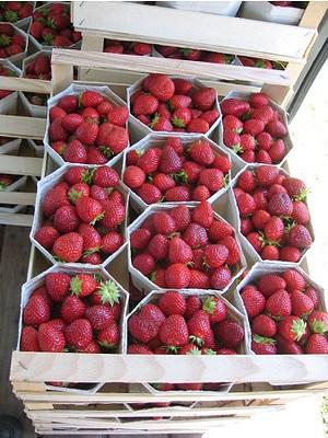 Lubera Erdbeere Wädenswil 6 6er Träger