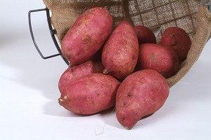 Lubera Süsskartoffel Murasaki