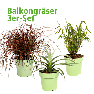 Mein schöner Garten Balkongräser 3er-Set