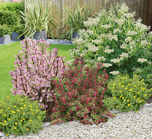 Mein schöner Garten Bienenfreundliche Hecke im Set, 5 Pflanzen