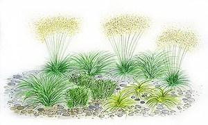 """Mein schöner Garten Gräserbeet """"Schatten"""", 12 Pflanzen"""