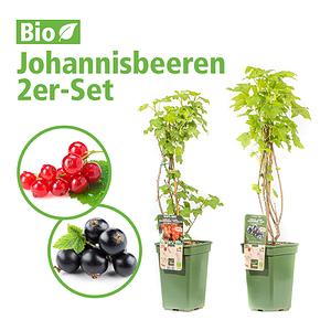 Mein schöner Garten Johannisbeeren 2er-Set
