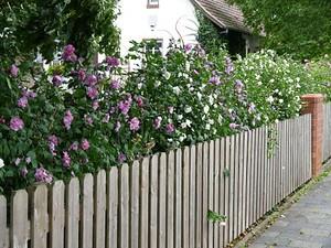 "Mein schöner Garten MEIN SCHÖNER GARTEN Hecken-Set ""Blütenhecke Hibiskus""; 15 Pflanzen"